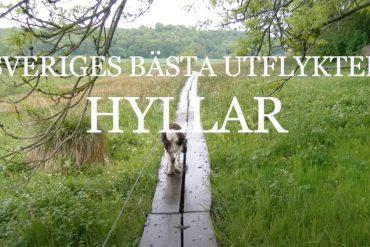 Sveriges bästa utflykter hyllar